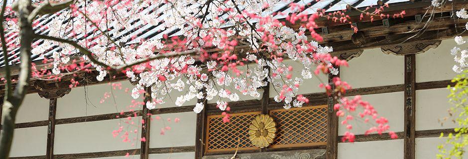 福島県本宮市にある岩角山岩角寺の公式ホームページです